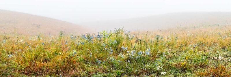Flint Hills Fall Wildflowers in Fog