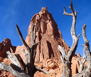 Recent Rocks & Trees
