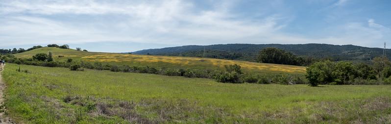 Edgewood_Park_wildflowers-pano-01.jpg
