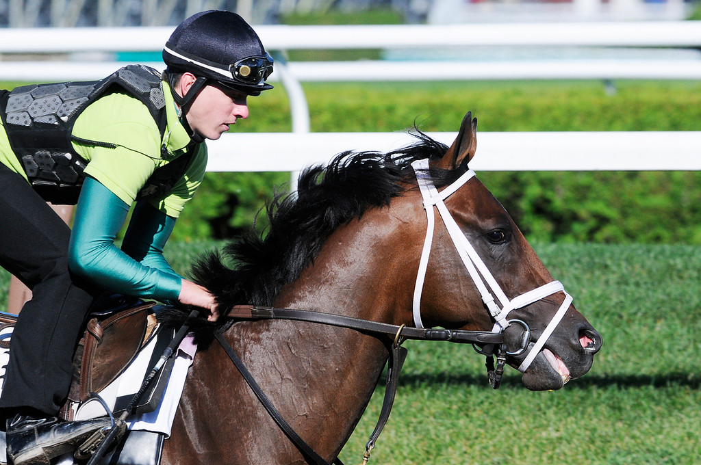 . Exercise Rider Jake Nelson atop Palace Malice breezed on Sunday morning, trained by Todd Pletcher from Dogwood Stables, set to run in Travers Stake at Saratoga Race Course.Photo Erica Miller/The Saratogian 8/11/13 spt_PalaceMalice2