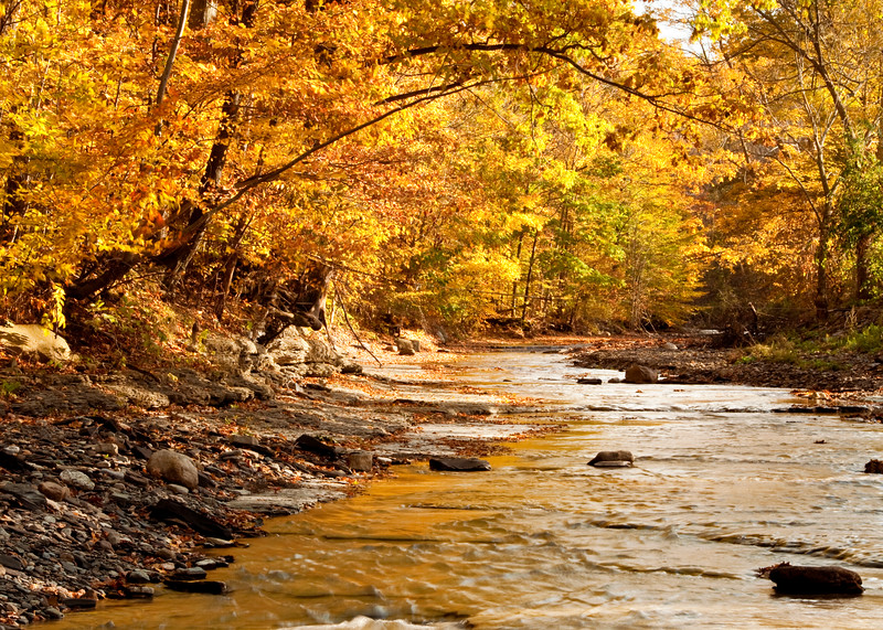 Golden creek.jpg