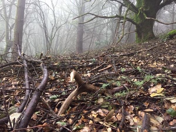 Antler in the Mist