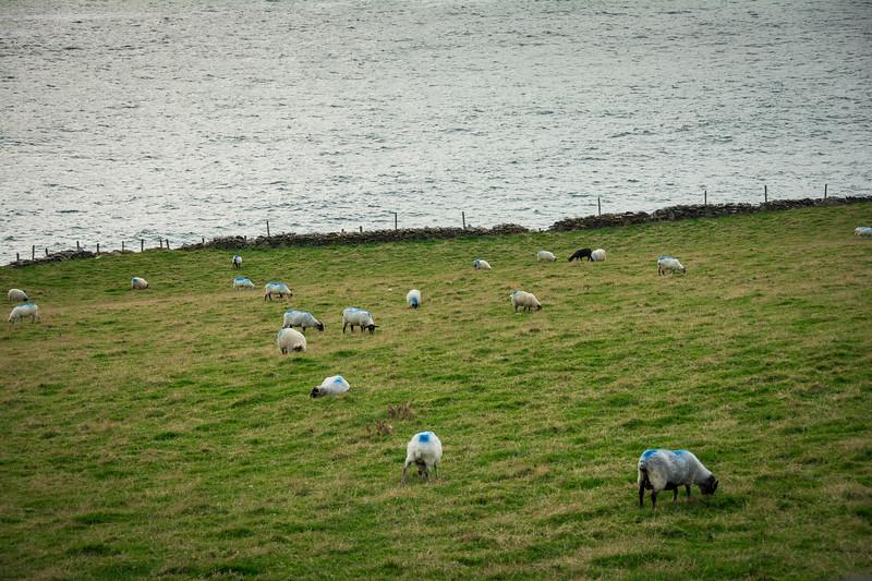 Ireland143.jpg