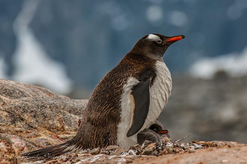 Antarctic-53