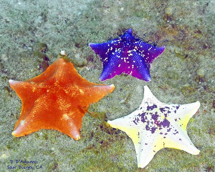 3 Stars San Diego, CA