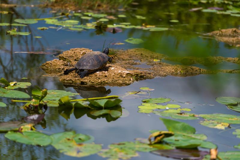 Everglades (30 of 60).jpg
