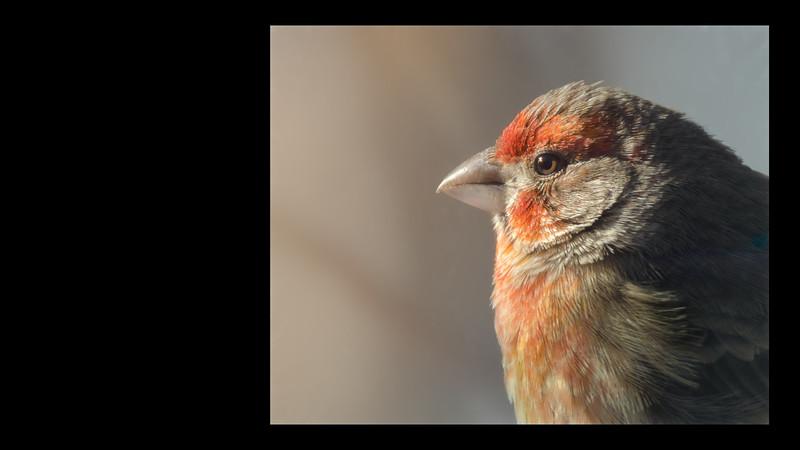 Ornithology (77) accrediation