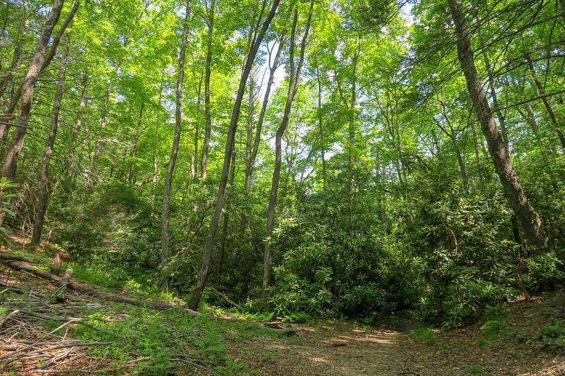 Bradley Creek Trail @ Pea Gap -- 2,620'