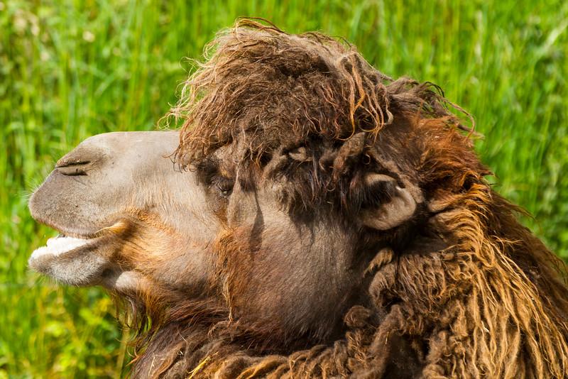 ZooOdense-2011-05-17-_MG_1279-Danapix.jpg