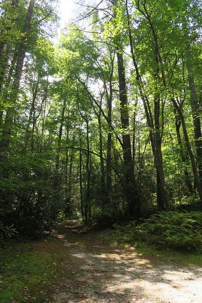 Heady Mountain Road Trail Access