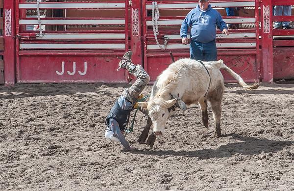 JJJ Bucking Cow's