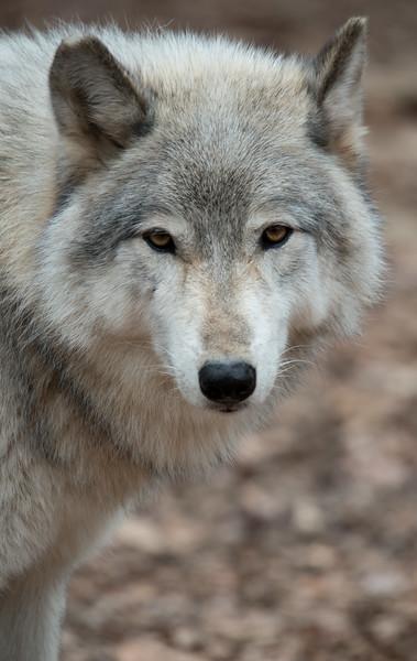 Seacrest Wolves_-64.jpg