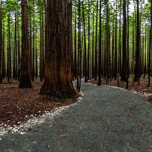 The Redwoods - Rotorua