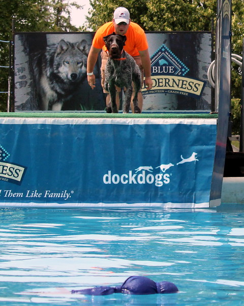 2015.8.6 Winnebago County Fair Dock Dogs (67).JPG