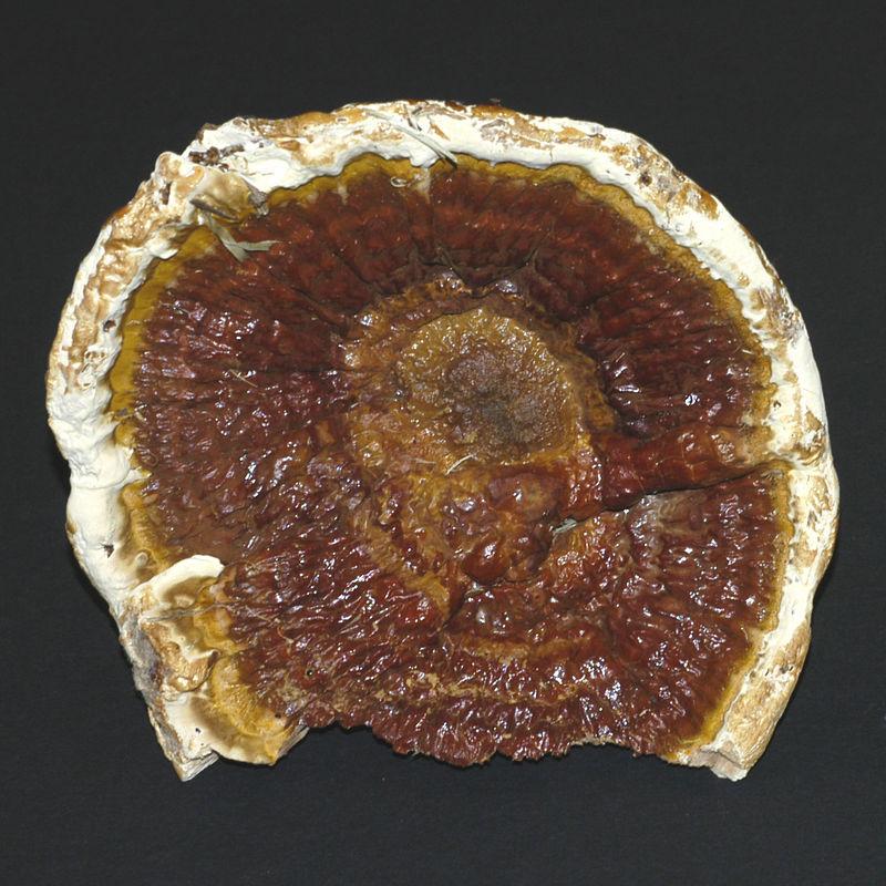 Mycology 046.jpg