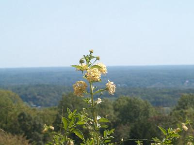 Monticello (Fall 2010)