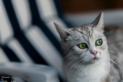 24.07.2014-Weisse Katze