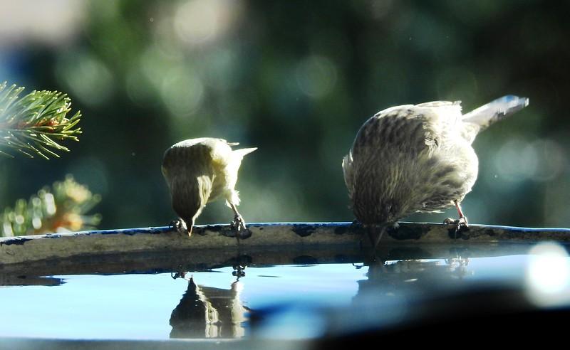birds (212).JPG
