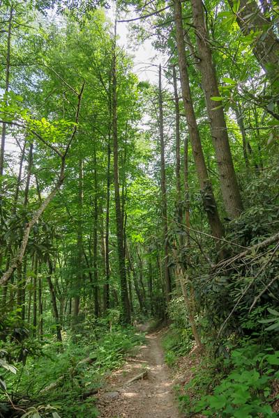 Sycamore Cove Trail -- 2,300'