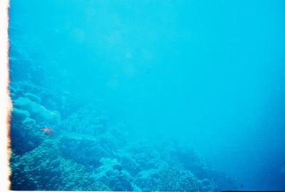 Diving - Fiji - 04.2008