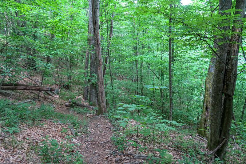 Greasy Cove Trail -- 4,400'