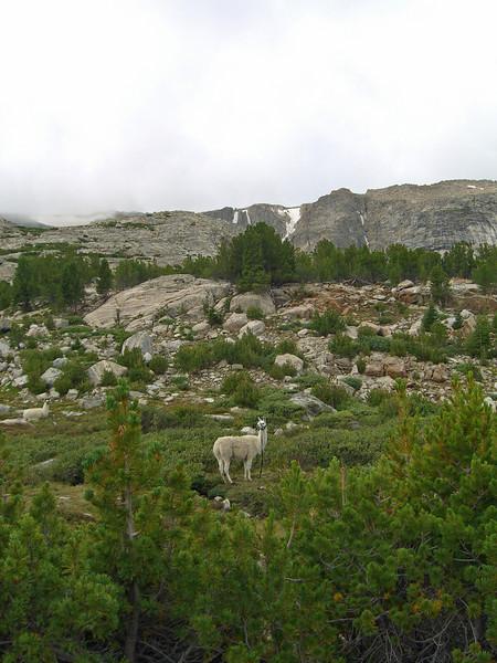 campsite pasture.jpg
