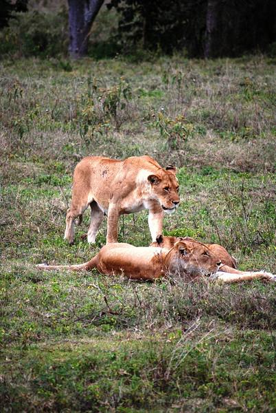 Ngorongoro (244).JPG
