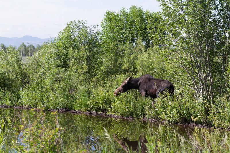 2011_07_08 Wyoming 122.jpg
