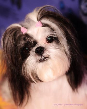 2009-01-03 Posin' Puppies ll