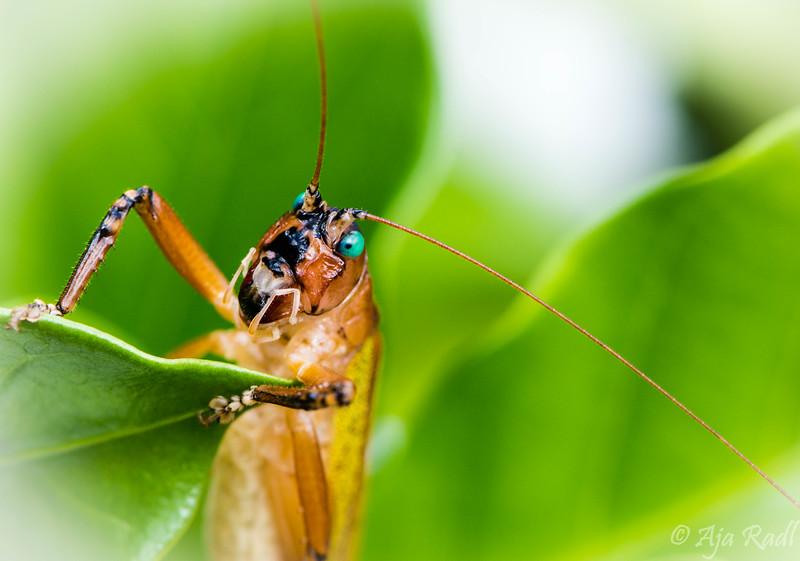 Grasshopper2-.jpg