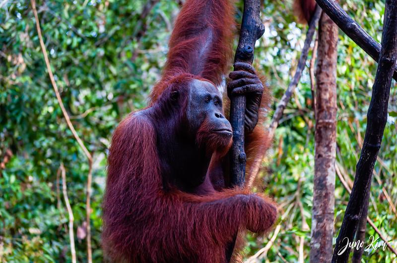 2012.10.07_Borneo_DSC_6879-Edit-Juno Kim.jpg