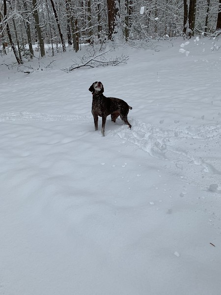 2019.01.13 - Morgen trying to catch snowballs 7.JPG