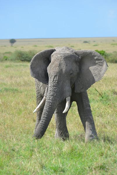 East Africa Safari 241.jpg