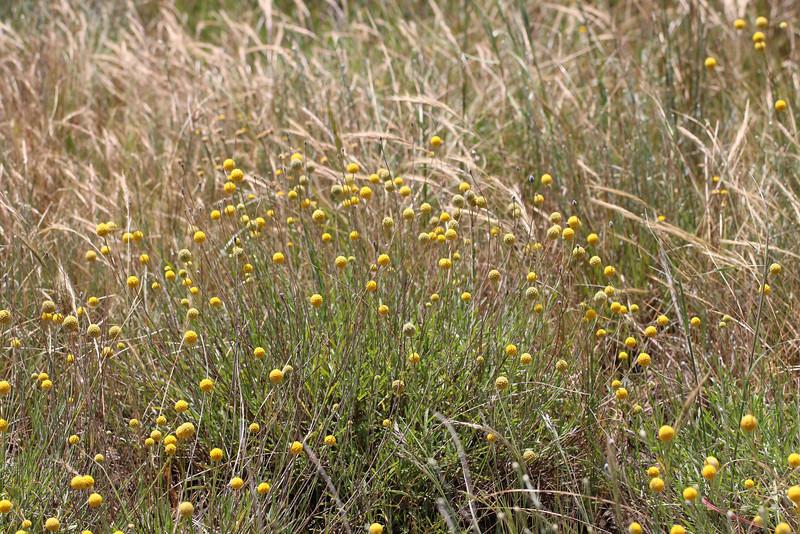 Mt Derrimut Grasslands