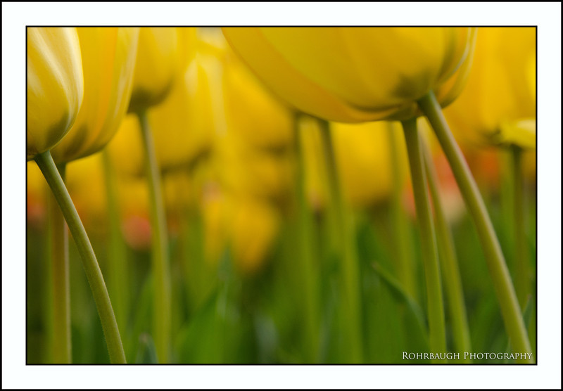 Rohrbaugh Photography Flowers 36.jpg
