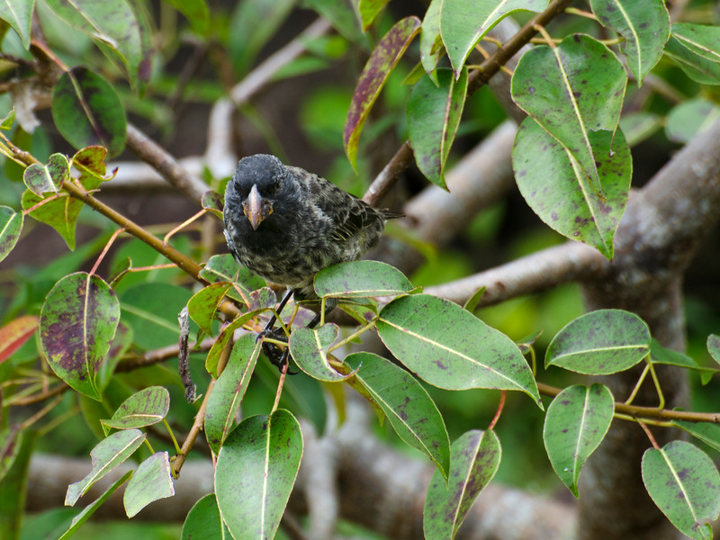 Galapagos-46-2.jpg