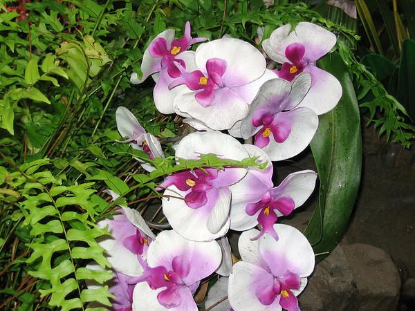 Hawaii April 2007