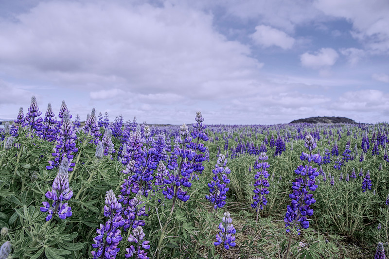 Iceland 3664.jpg
