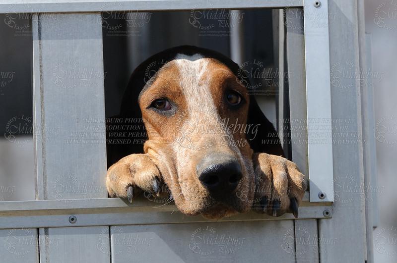 Snickersville Hounds 03-04-2012