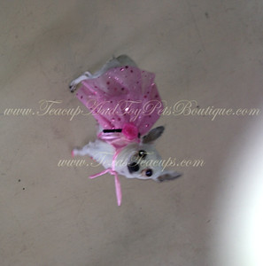2014 Chihuahuas Sold