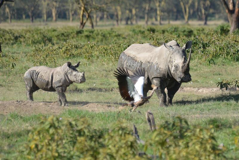 East Africa Safari 111.jpg