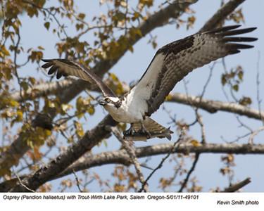 Osprey&TroutA49101.jpg