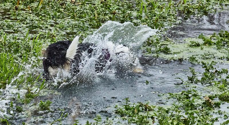 Water Medow-3611.jpg