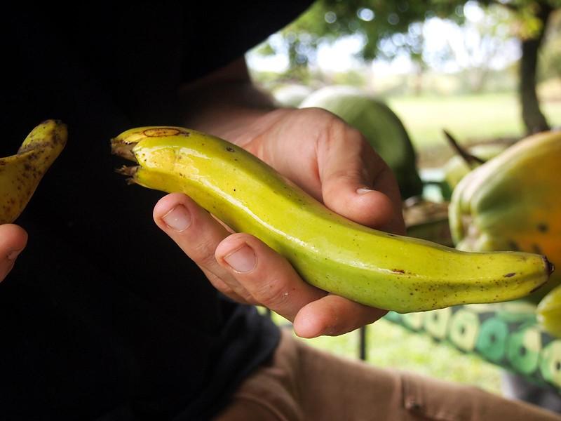 Tu'ugia-banana.jpg