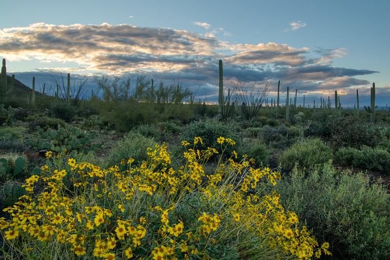 Saguaro NP 2020-1.jpg