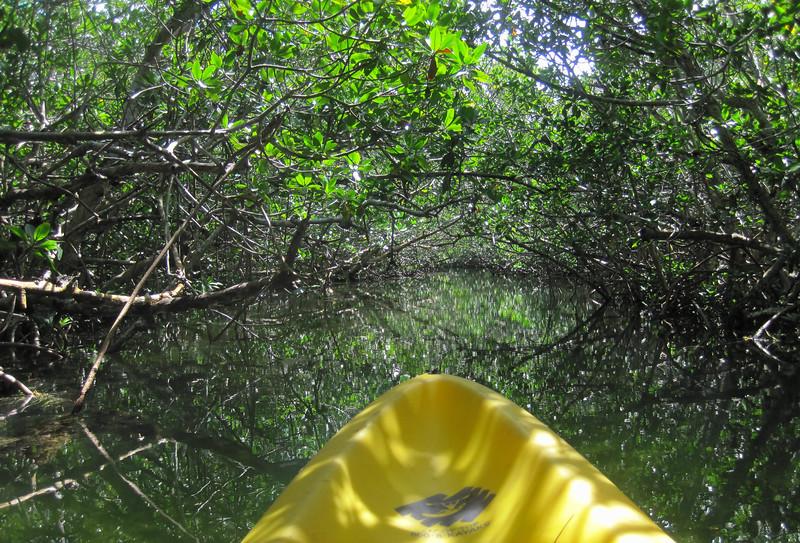 paddling mangrove creeks-5.jpg