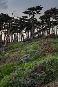 20170201_SAN_FRANCISCO (13 of 24)