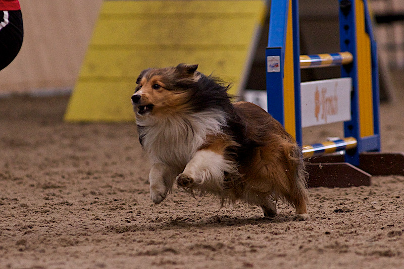 small dog final 1258.jpg