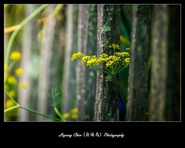 unknow flower-49