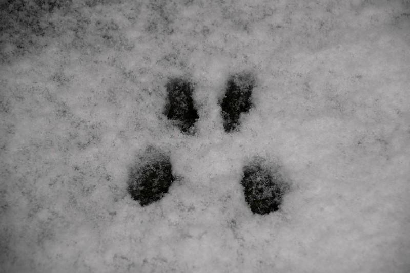 snow_o1_2018_006.jpg